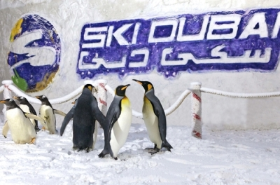 Ski Dubai (Super Pass) in Emirates Mall