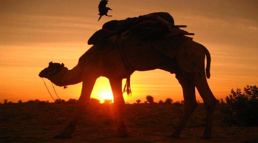 Red Dunes Desert Safari Tour Dubai