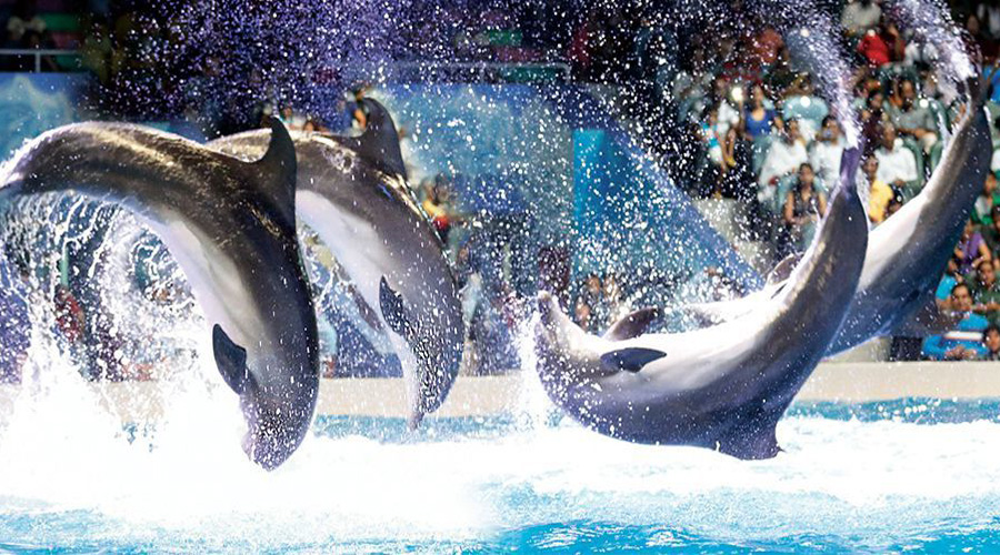dolphin show in dubai creek park